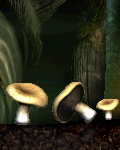 GB Pizza Dough Mushrooms