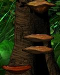 GB Shelf Mushroom